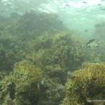 red-sea-diving_020212_0395.jpg