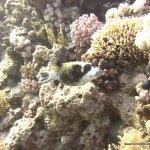 red-sea-diving_280112_0192.jpg