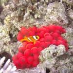 red-sea-diving_280112_0197.jpg
