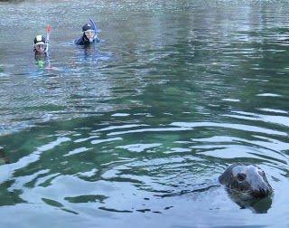 Babbacombe seal