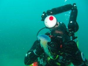 Jellyfish/underwater photographer (Chesil Cove, Dorset/Kasia Hallet)