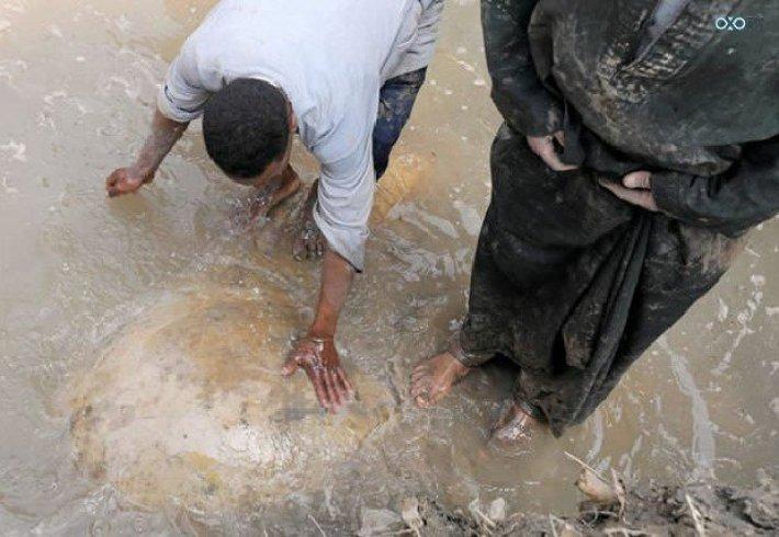 არქეოლოგებმა რამზეს II ქანდაკება აღმოჩინეს, რომელიც 3000 წლის განმავლობაში გაუჩინარებულად ითვლებოდა.