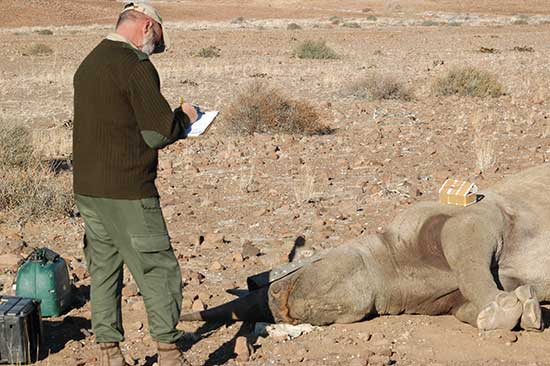 Bernd Brell, SRT's director special operations, with a rhino that was collared last year