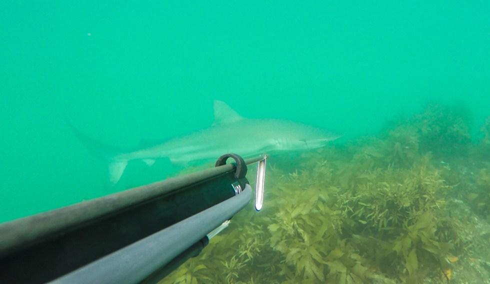 Shark blog