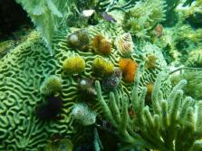 Sapins de Noêl dans les eaux beliziennes
