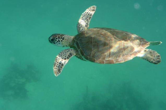 14 copine-tortue-nonchalante