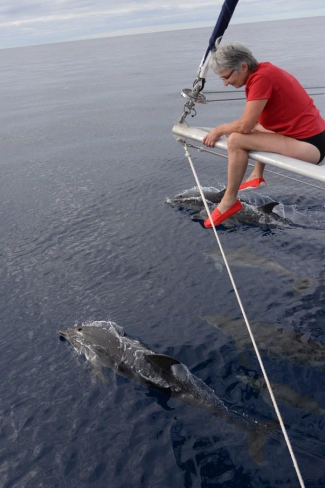18-liliane-et-ses-copains-dauphins