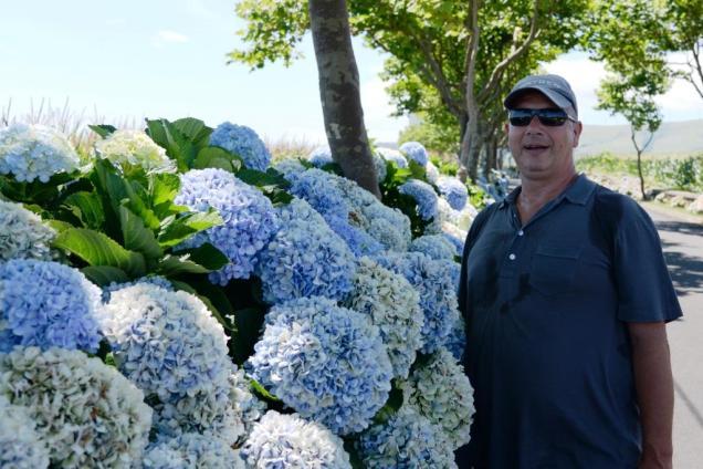 4-une-fleur-parmi-les-fleurs-les-fameux-hortensias-des-acores