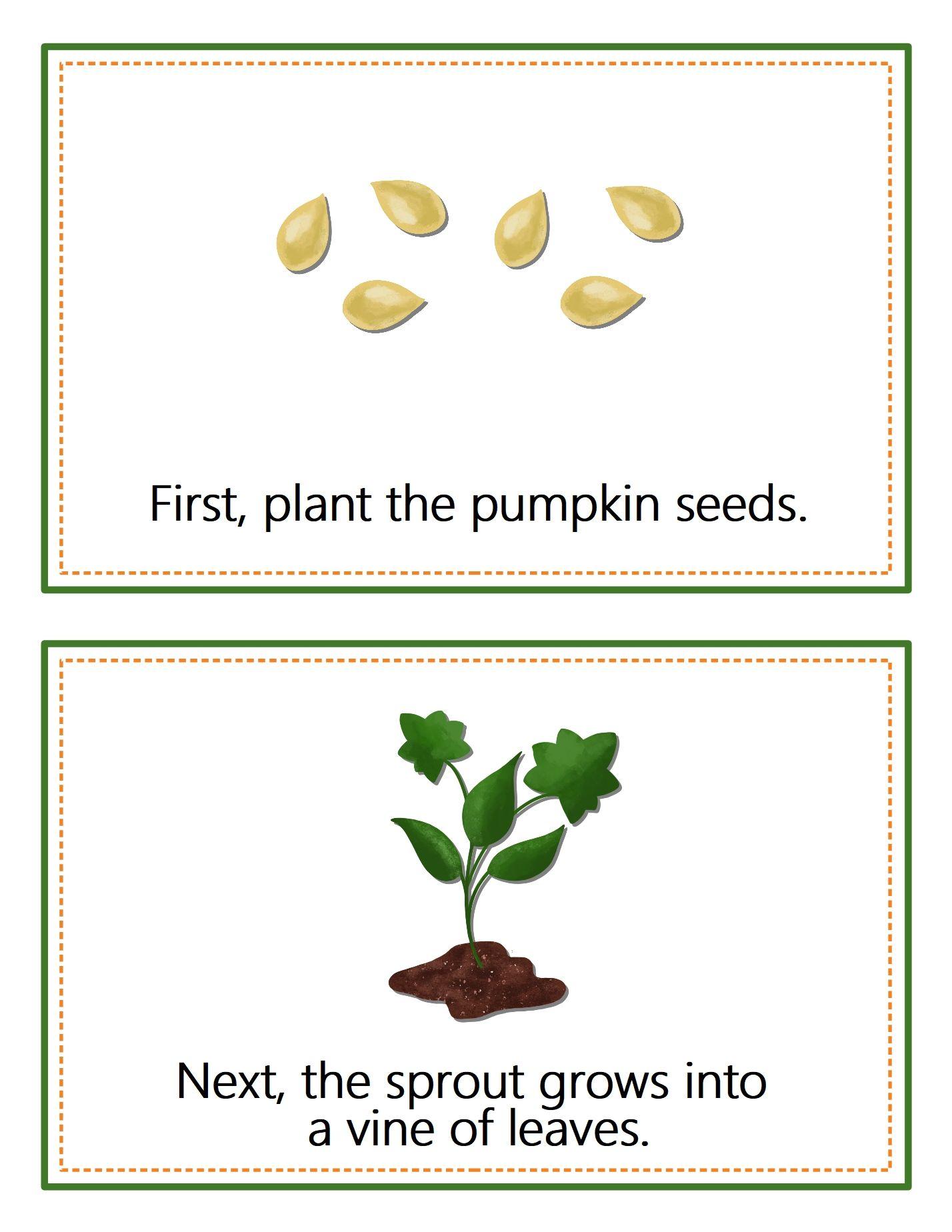 The Life Cycle Of A Pumpkin Exploring The Parts Of A Pumpkin