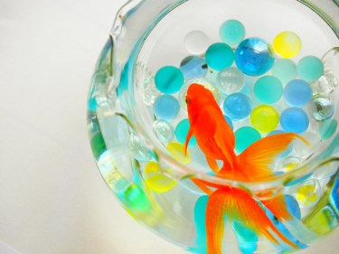 金魚がパクパクするのはナゼ?底でパクパクする理由とは