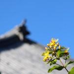 花と本堂の屋根