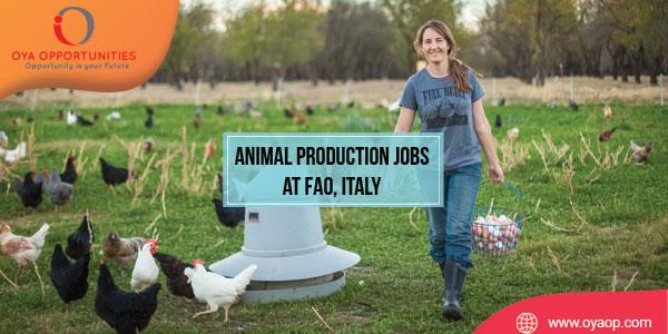 Animal Production Jobs at FAO, Italy