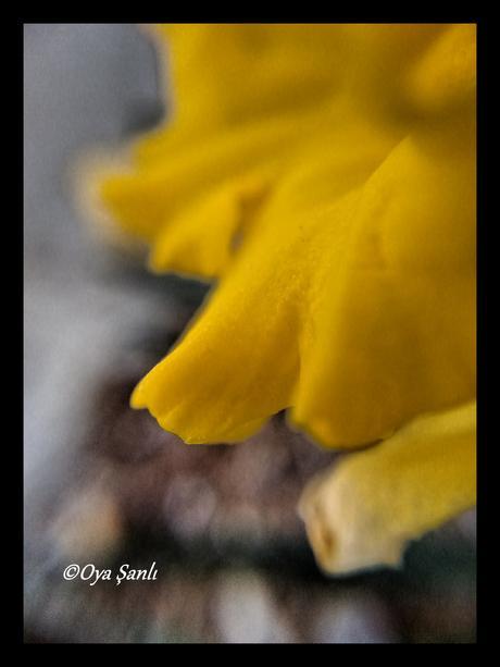 #everydayisflower - Macro World