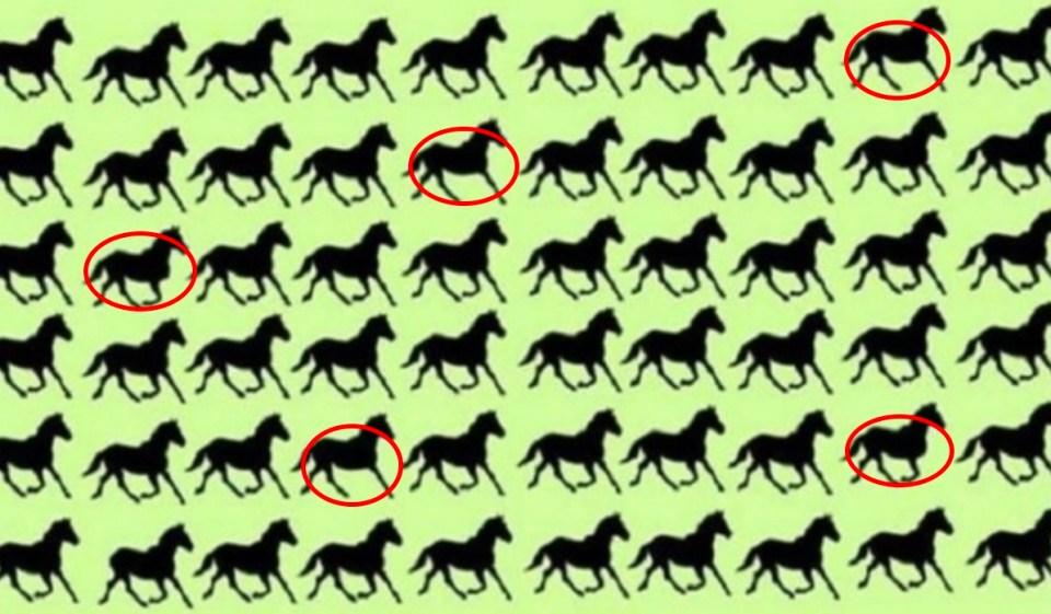 ¿Puedes encontrar los 5 caballos de tres patas en este reto viral?