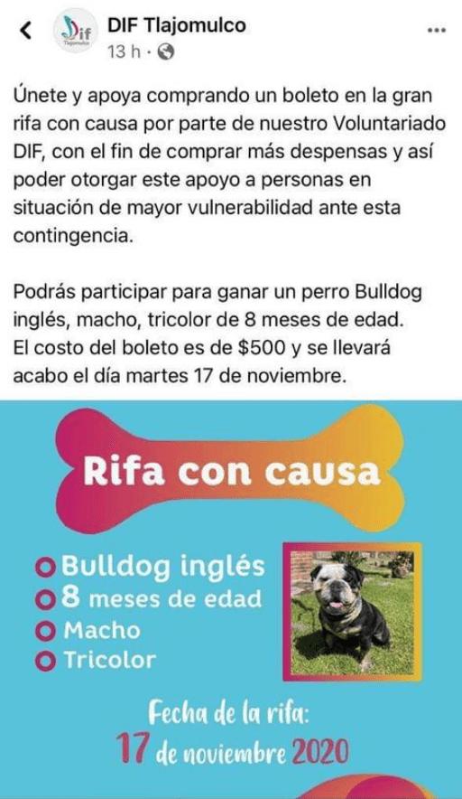 Y en Jalisco: DIF organiza rifa de un perrito para comprar despensas