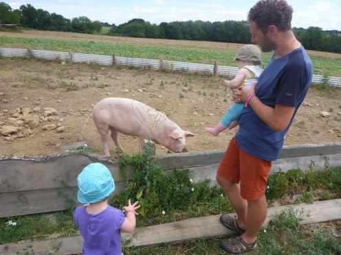 Des cochons | Pigs