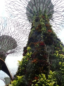 Mega trees
