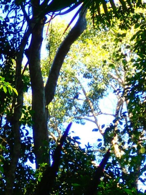 Khao Yai national park : calao | hornbill