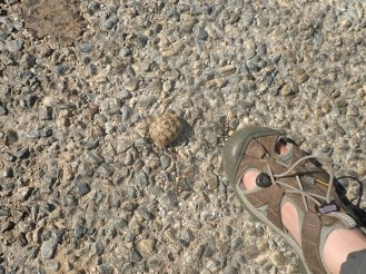 Petite tortue sur la route | Small turtle on the road