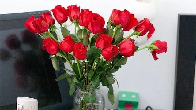 rosesown2 Last Minute Valentine's Day Gift Deal: Get 2 Dozen Roses for $19.99   IGN