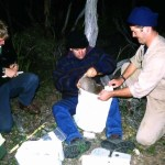 Population Monitoring Bettong