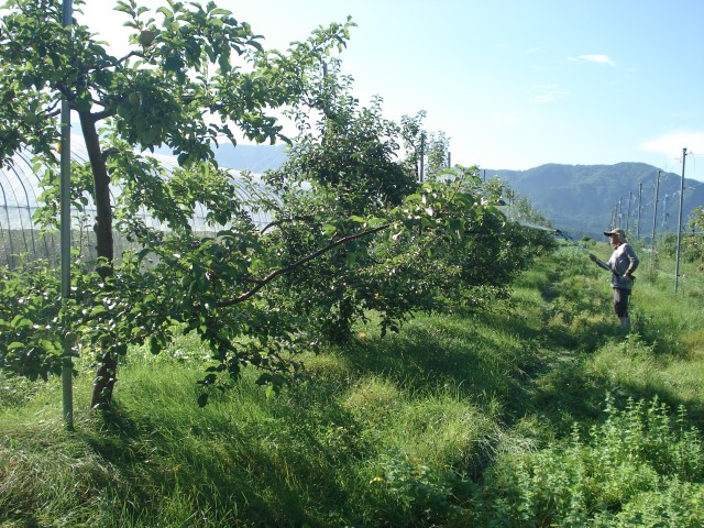Apple-organic-farm-japan