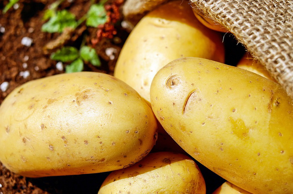 Patates: Kartof, Kartol, Kartop (Karadeniz bölgesi)