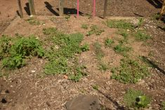 weeds before removing