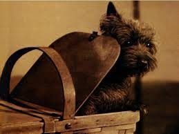 toto-in-basket
