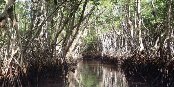 3/1  Everglade, ett äventyr
