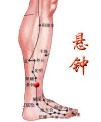 絕骨 - A+醫學百科