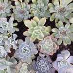 Wallpaper Aesthetic Green And Succulents Image 6943423 On Favim Com