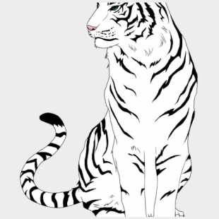 White Tiger Clipart Cliparts Cartoons Jing Fm