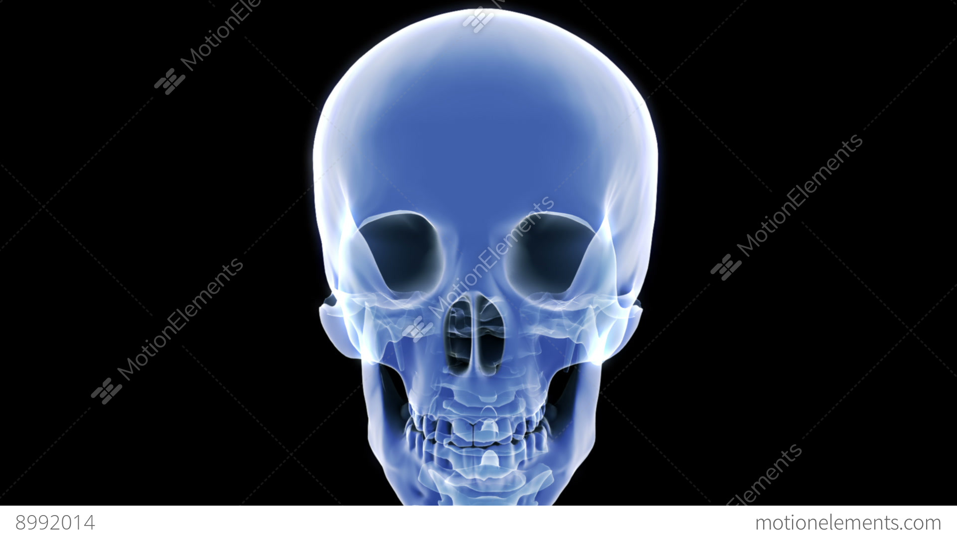 X Ray Skull Stock Video Footage
