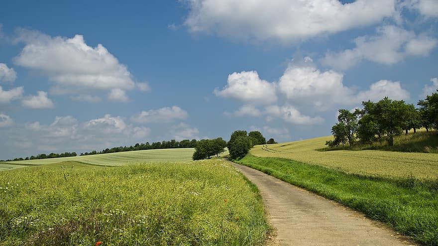 フィールド、離れて、夏、空、雲、Lane、風景