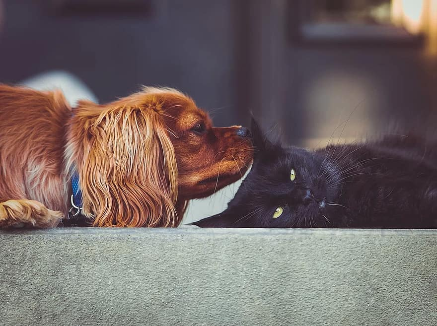 ネコ、子猫、犬、子犬、ペット