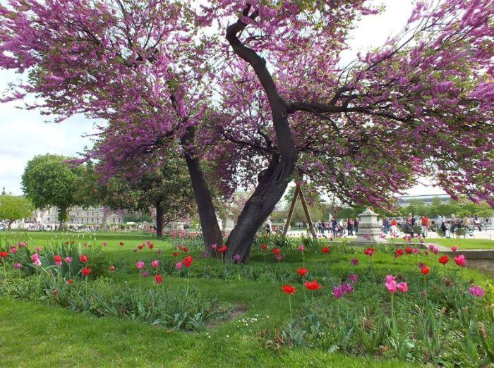 Paris-France-jardin-des-tuileries-louvres (1)