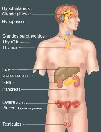 dysfonction glande thyroide