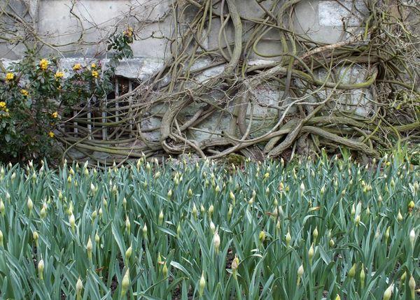 Jardin-des-plantes-Rouen-serre-fleurs-monet (15)