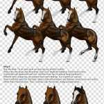 Horse Drawing Tutorial Brown Horses Illustration Transparent Background Png Clipart Hiclipart