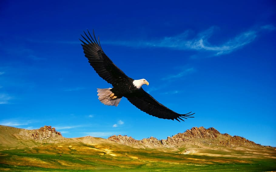 flying, bald, eagle, daytime, prairie, steppes, mountains, vegetation, nature, birds