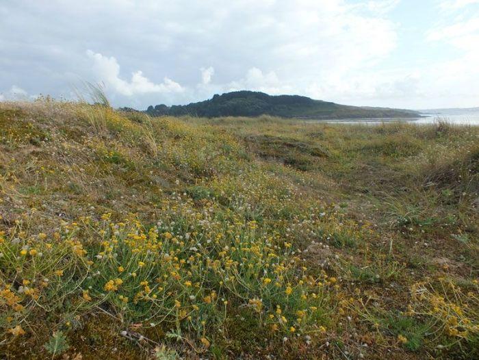 dunes-bretagne-finistere-baie-douarnenez-sainte-anne-la-palud-faune-flore-promenade-sortie-vacances (4)