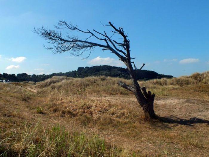dunes-bretagne-finistere-baie-douarnenez-sainte-anne-la-palud-faune-flore-promenade-sortie-vacances (10)