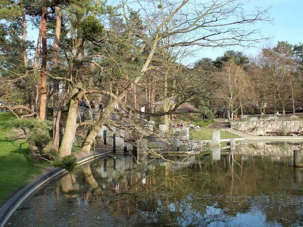 parc-floral-vincennes-printemps-fleurs-jonquilles-magnolias (4)