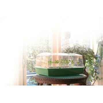 semis sous mini serre ou en interieur