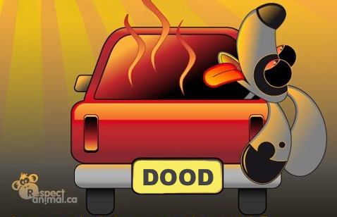 Oververhitting hond in auto