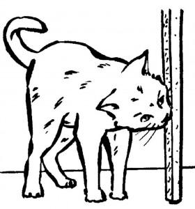 Chat en train de marquer son territoire