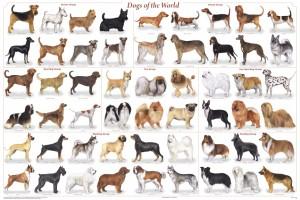 Poster races de chien