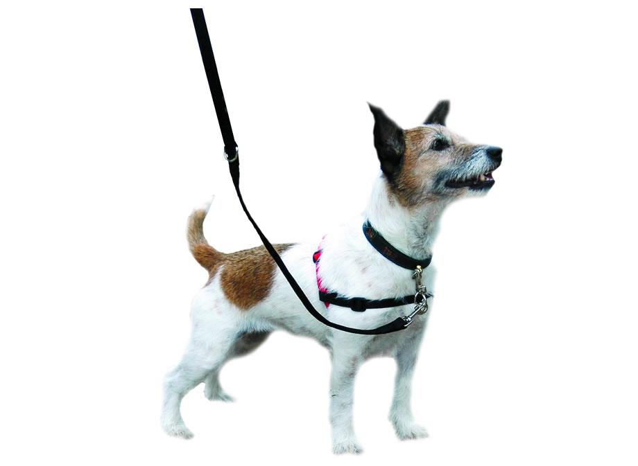 collier pour chien pour ne pas tirer
