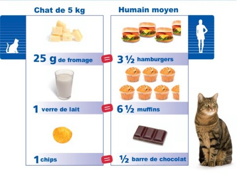 equivalence friandises chat